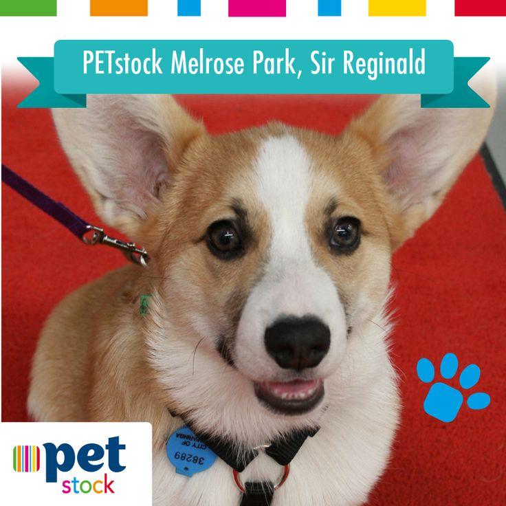 Sir Reginald the PETstock Melrose Park winner