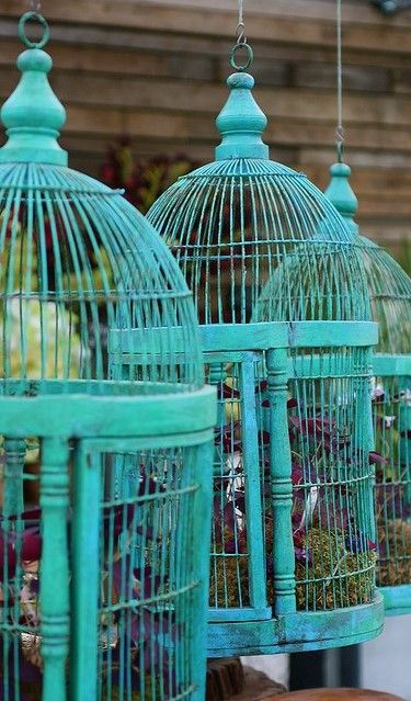 Love the vintage turquoise color of the birdcages - specially set against the brown wood in the background.