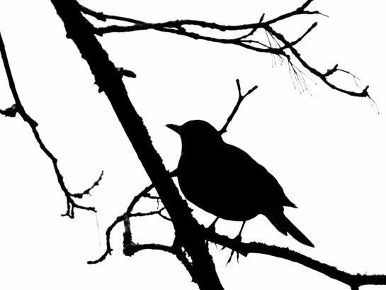 V gel on pinterest - Vorlage vogel ...