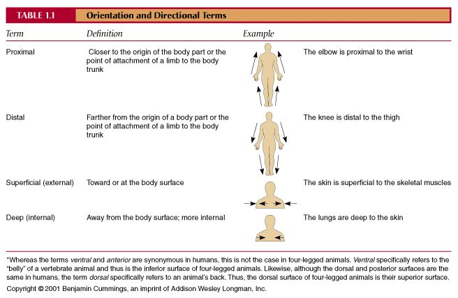Image result for anatomy and physiology orientation and ...
