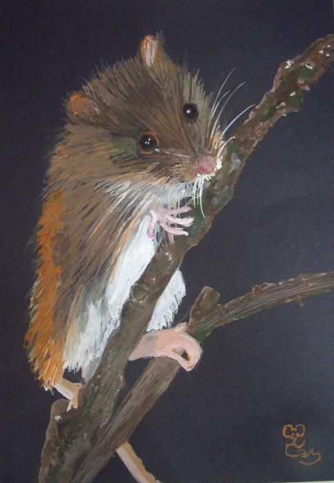 Harvest Mouse   watercolour