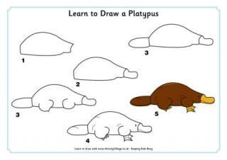 Learn to Draw a Platypus