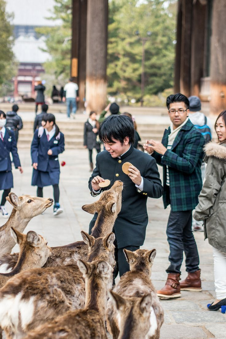 Nara, Japan. A place where deers roam free and you can even buy them treats!  Maybe they'd like to try a snack from our Snakku box!
