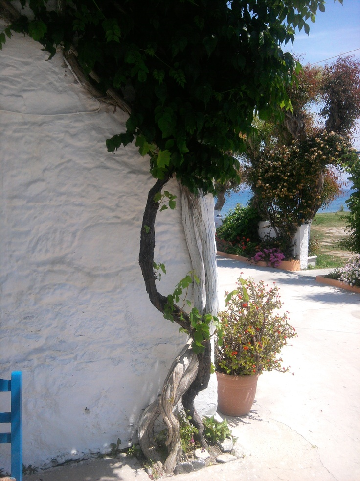 Picture taken in a typical Greek Taverna on the beach in Kos Town, Kos to find more Greek Tavernas visit www.kosexplorer.com