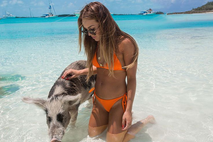 Pig Island In The Bahamas