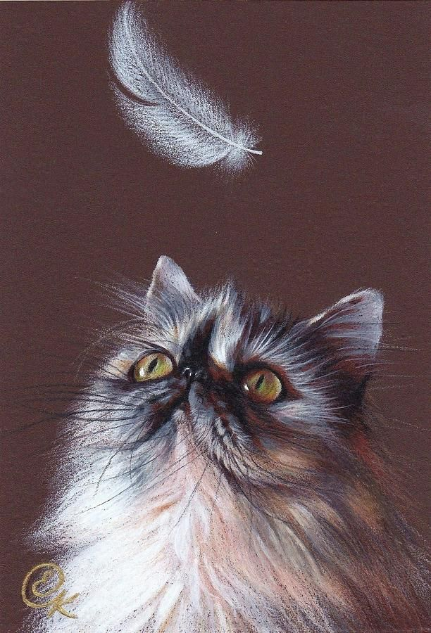 Cat And Feather Drawing  - Cat And Feather Fine Art Print