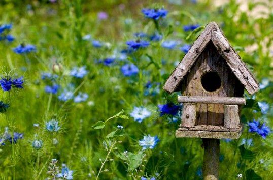 birdhouses: Birdhouses, English Garden, Idea, Blue Flowers, Gardens, Bird Houses, Birds