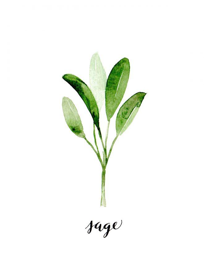 DRAWING Sage Gladioli 10 x 15 * Flowers fenschel.. ** POSTCARD CHAMOMILE