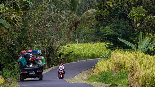 Bali. Street scene near Jatiluwih.
