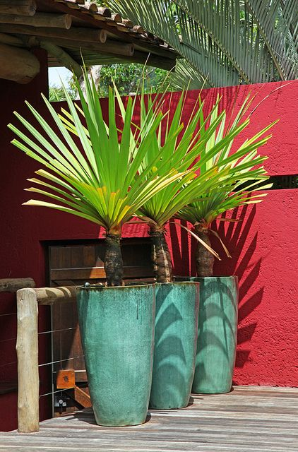 Tall planters elevate small plants.