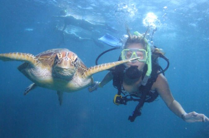 Great Barrier Reef Diving and Snorkeling Cruise from Cairns - Lonely Planet