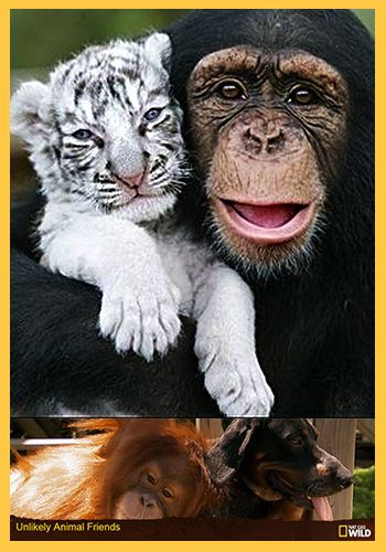 national geographic unusual animal friends - Yahoo! Search Results