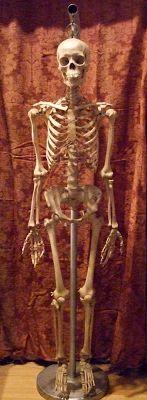 Pandora's Parlor: Vintage Real Human Skeleton for Sale!
