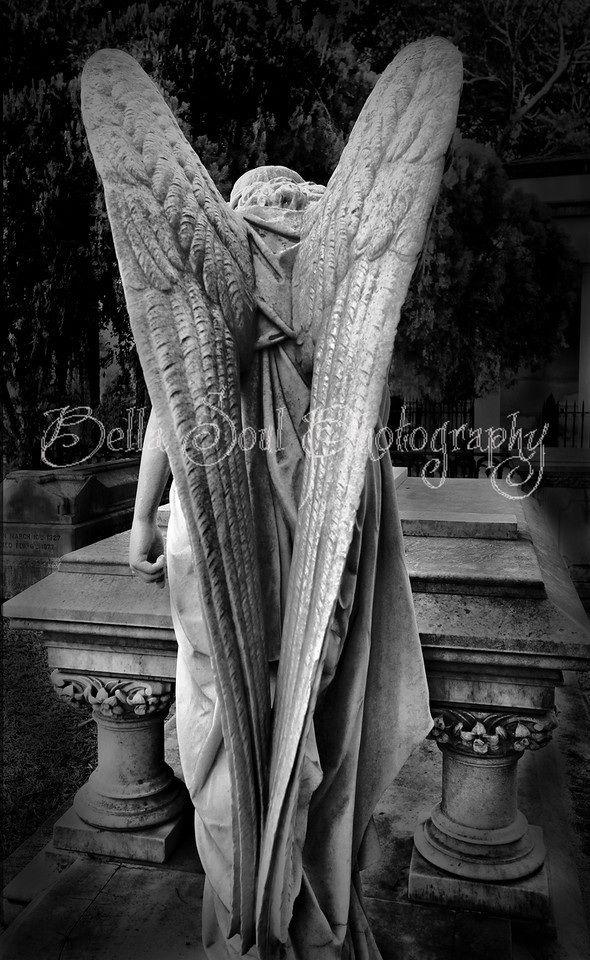Graceful wings in Savannah, GA
