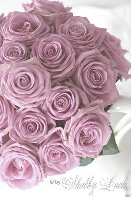 Wunderbares Zuhause: Die Glasglocke und die Rosen.