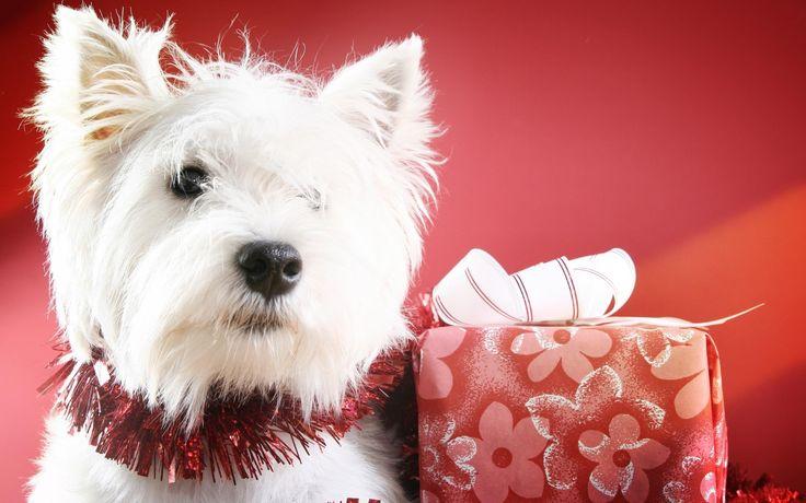 dog christmas pictures free   Dog christmas photos dowload