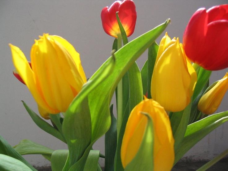 stelian ilie flower 6