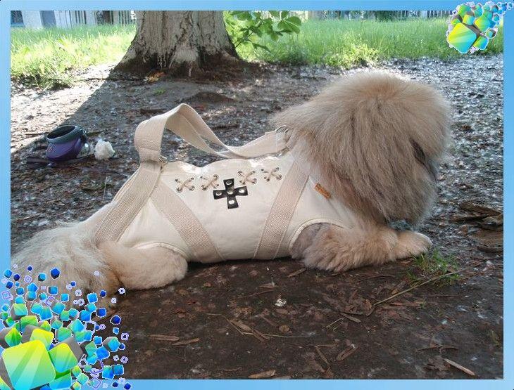 сумки для собак - Самое интересное в блогах