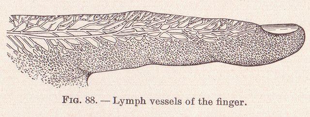 immunsystem lymphknoten hals