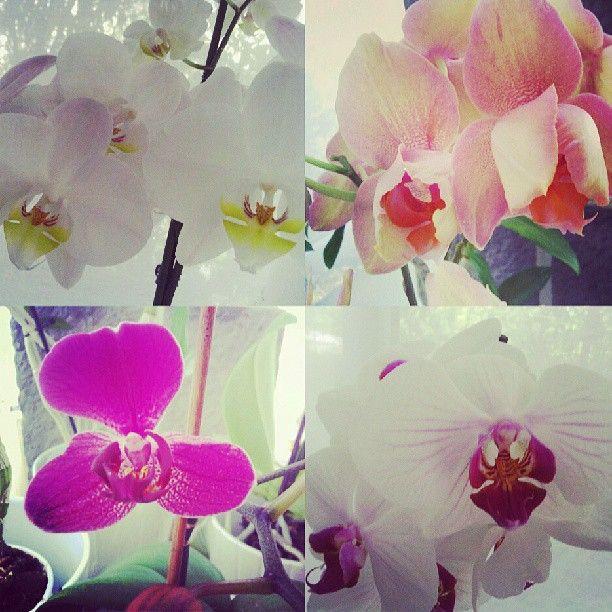 #portalpecaapeca #garden #flowers  Follow us:  http://www.pecaapeca.com http://www.facebook.com/portalpecaapeca