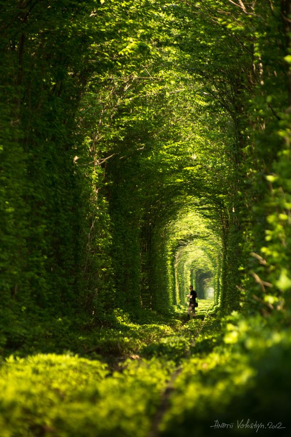 In Klevan city in Ukraine there is a natural tunnel of trees created by trains - it calls tunnel of love. #TreeTunnel