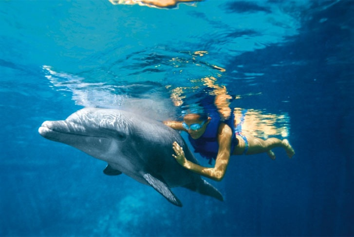 Swimming with the dolphins at Dreams Cancun