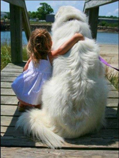 Great Pyrenees. They're such good dogs for kids!                                                                                                                                                                                 More