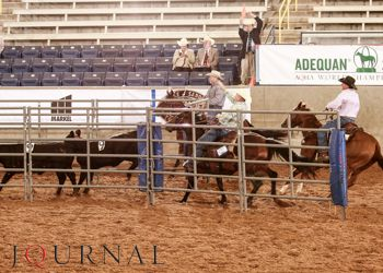Here is the interview of Robert Salzbrenner, Mike Belter and Bobby Gray who were the 2014 #AQHA #SelectWorld champions in #TeamPenning with their #QuarterHorses, Smart Midnight Lace, Talkeetna Tari Olena and Dualeote Rey!