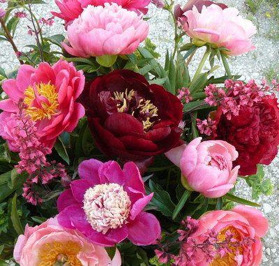 blumengarten andrea köttner: Pfingstrosen, Taglilien, Iris: Startseite