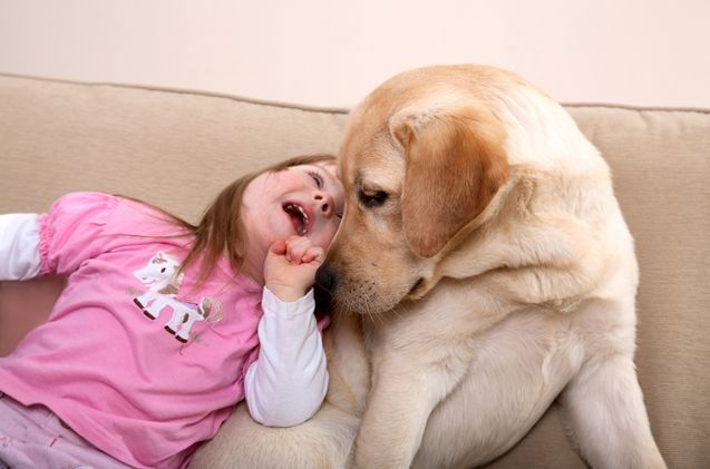 A therapy dog is one that is trained to provide comfort and affection to individuals in nursing homes, hospitals, schools, hospices and other areas. Therapy dogs are also useful for children who have autism and various learning disabilities.