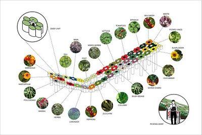 Forage Berkeley: Designing Urban Agriculture