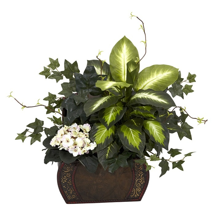 Very Beautiful African Violet, Dieffenbachia U0026 Ivy Silk Plant Sitting In  Wood Chest For Your