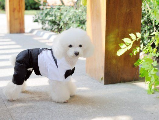 Amazon.com : Dogloveit Cotton Gentleman Costumes Soft Clothes For Dog Cat Puppy Pet, White, Small : Pet Supplies $6.30