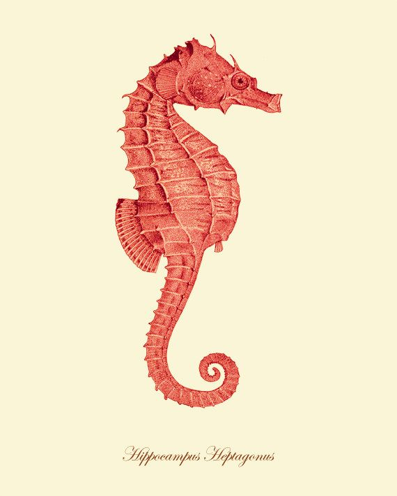 Seahorse Vintage prints old prints home decor wall art Ocean Decor Natural History sea life art antique prints nature print11x14 art print