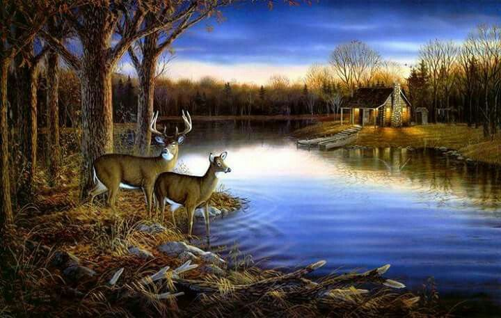 Pin by Cindy Craig on Pics I Like Deer wallpaper