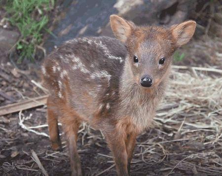 오늘의유머 - 얘가 그 유명한 꽃사슴.gif