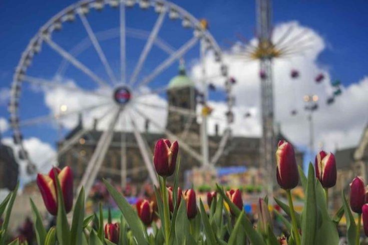 AMSTERDAM - Het Tulp Festival zet dankzij het mooie weer in de eerste twee weken de hoofdstad in vuur en vlam op verschillende locaties. De nieuw gedoopte Paleiskwartiertulp is uit zijn schulp gekropen en begroet de bezoekers van de laatste Lentekermis op de Dam (foto). Dit zijn een paar plekken waar in het Pasen-weekend een