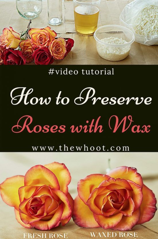 How To Preserve Roses With Wax Video Instructions Hands On