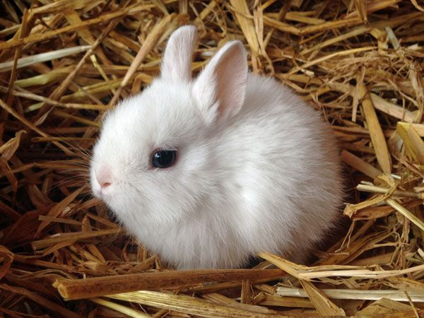 Kaninchen Kaufen Munchen Zwergkaninchen Kaufen Munchen Zwergkaninchen Zuchter Munchen Cute Animals Cute Bunny Pictures Cute Baby Animals
