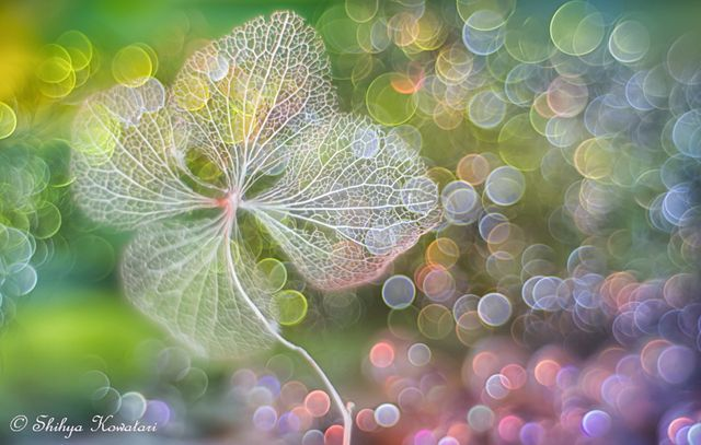 30 Beautiful Bokeh Images to Capture Your Imagination | 500px ISO | Bloglovin'