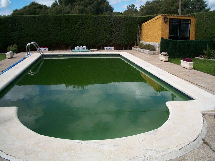Piscina con agua de color verde, infectada por las algas.
