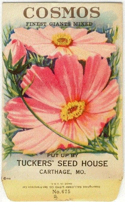 Vintage Flower Seed Packet Tuckers Seed House by gardenlelah, $6.00