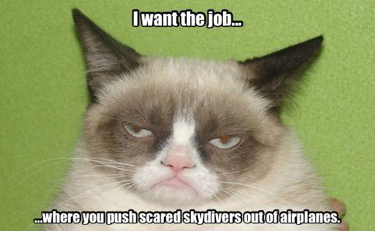 712 best images about grumpy cat on pinterest