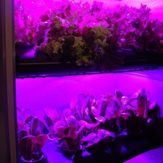 Умная мини-ферма FIBONACCI: овощи и фрукты на гидропонике