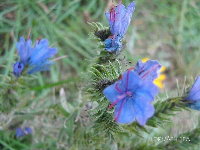 Virág? :-)
