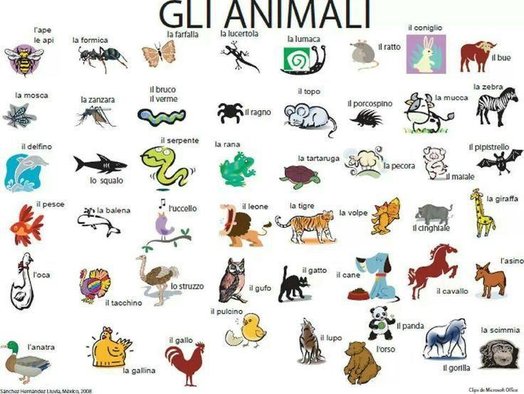 gli animali in italiano - Google Search