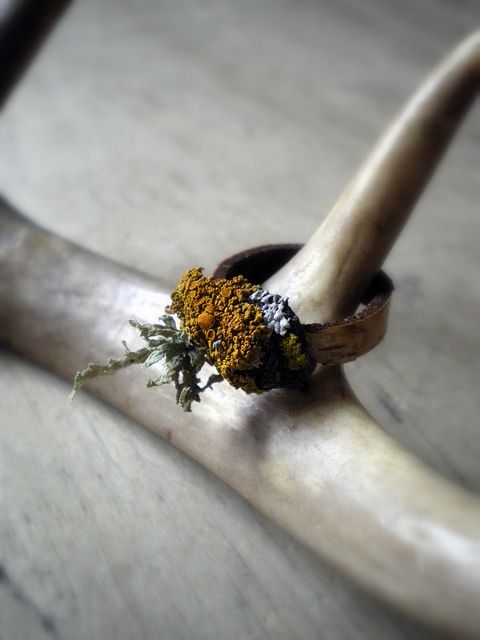 a ring of birch and lichens | Flickr - Photo Sharing!