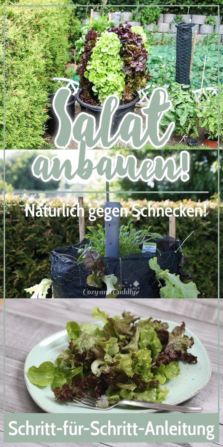 Schnecken natürlich bekämpfen- Salat aus dem Garten im Salat-Turm. Anleitung