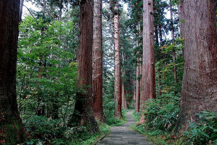 Hagurosan Path to the summit - Mount Haguro (羽黒山 Haguro-san) is one of 3 Mountains of Dewa in the ancient province of Dewa now Yamagata Prefecture. Mount Haguro https://en.wikipedia.org/wiki/Mount_Haguro TRANSPORT Sakata Train Station-Tsuruoka Station, bus Shonai Kotsu Tsuruoka Zuishinmon/Haguro Center (40 minutes, one-way Y820) or to summit of Haguro-san (55 minutes, Y1180) http://www.japan-guide.com/e/e7902.html UETSU TRAIN https://en.wikipedia.org/wiki/Uetsu_Main_Line