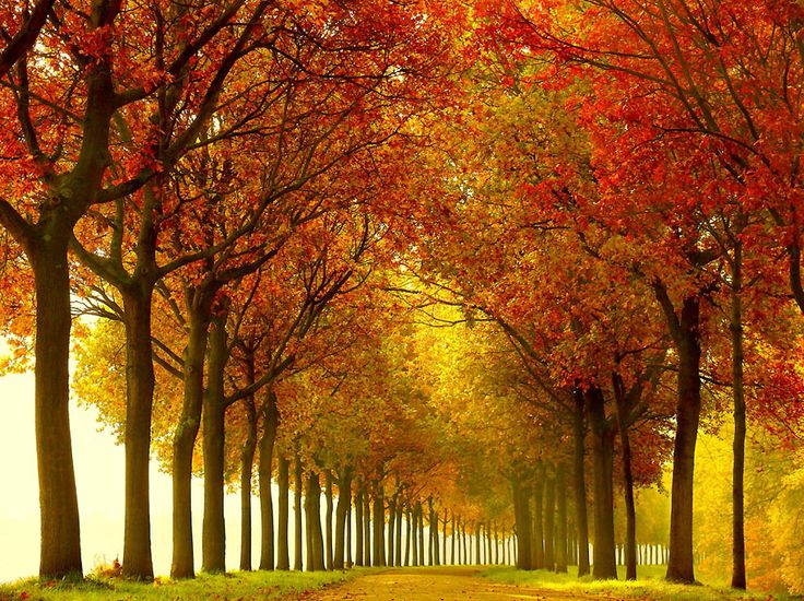Лесные пейзажи Lars van de Goor